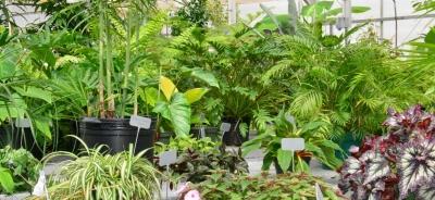 plante exotique 4 lettres